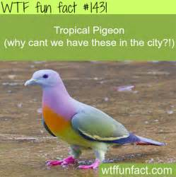 22 interesting facts from wtf fun facts