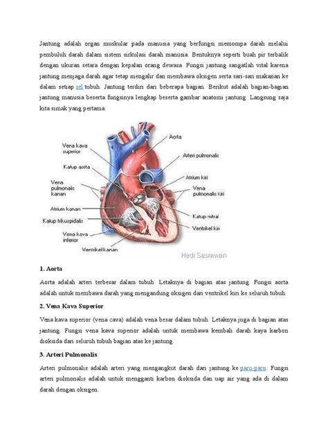 Novel Terjatuh Pada Bagian A jantung adalah organ muskular pada manusia yang berfungsi memompa darah melalui pembuluh darah