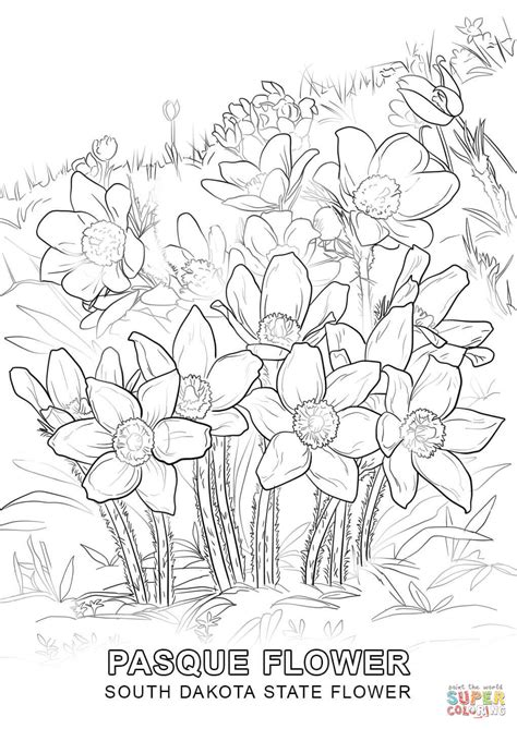 coloring pictures of state flowers sd free colouring pages