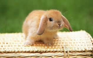 Rabbit Hutches World Garagesalegal Com Hopping From Sale To Sale Brambley