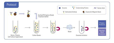 streptavidin protocol exocap streptavidin kit caltag medsystems