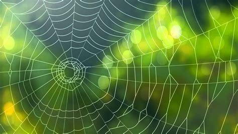 imagenes background web spider background video animated web backgrounds youtube