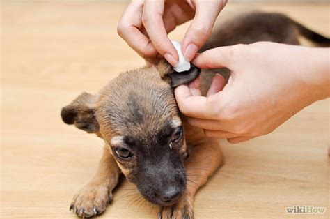 how to clean your s ears how to clean your pet s ears roots technologies
