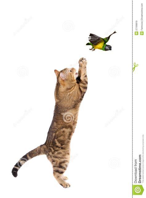 Adult cat catching bird stock image. Image of nature