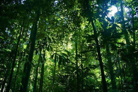 rainforests  sustaining ecosystems biodiversity