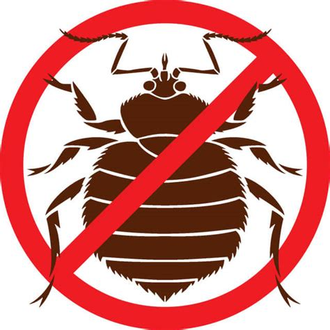 when do bed bugs come out where do bed bugs come from bed bug facts