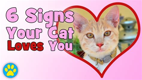 6 signs your cat loves you youtube