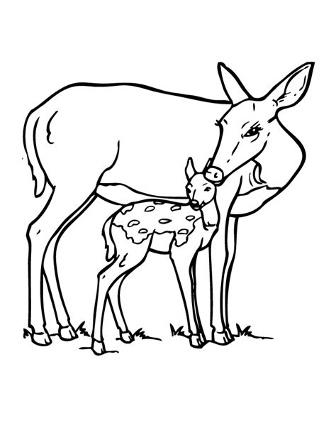 Deer And Fawn Coloring Page H M Coloring Pages Fawn Coloring Pages