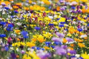 oregon wildflowers wildflowers bee friendly and gardens