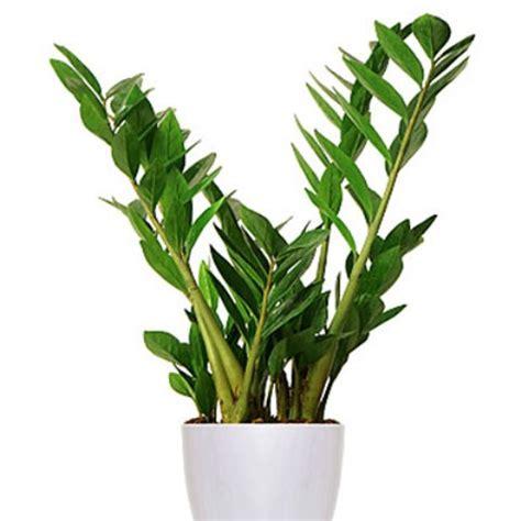 easy  grow houseplants   light homes