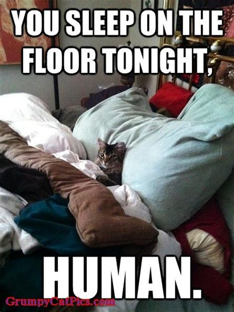 Grumpy Cat Sleep Meme - you sleep on the floor tonight human kitty cat kittens
