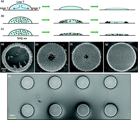 pattern formation in drying drops zno nanowire array growth on precisely controlled patterns