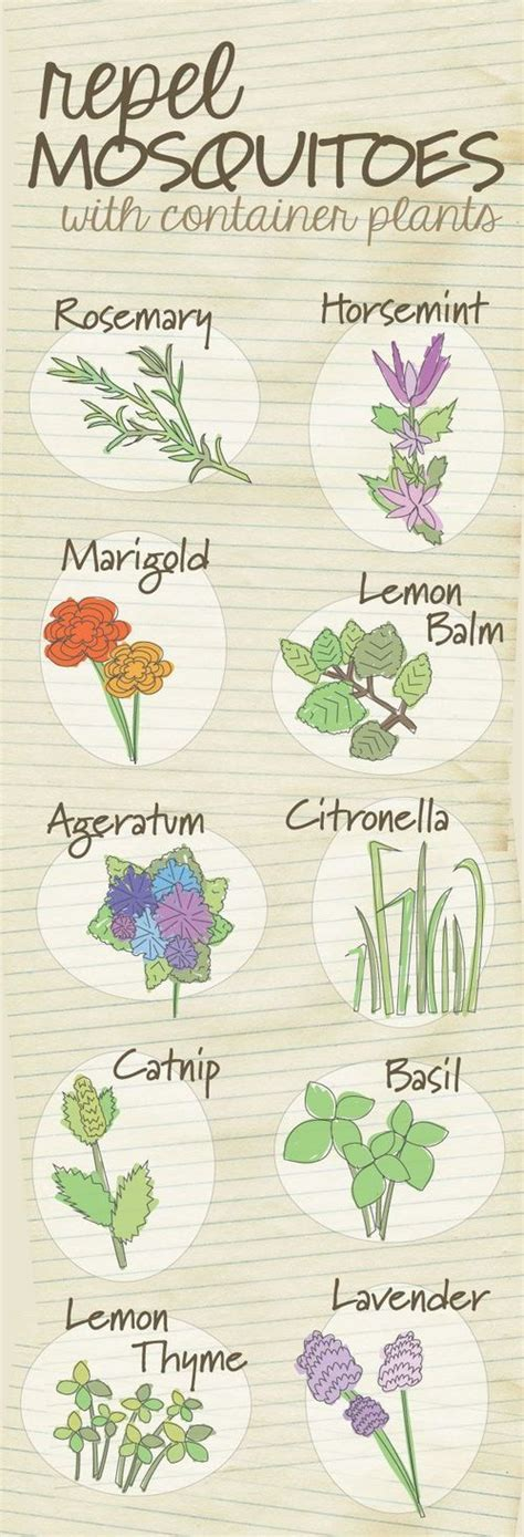 plant these in the garden to repel mosquitoes won t get rid of them completely but every
