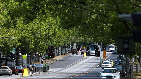 tree shop melbourne tree change for st kilda rd herald sun
