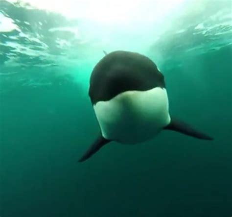 imagenes asombrosas del oceano 12 im 225 genes aterradoras del oc 233 ano que podr 237 an darte