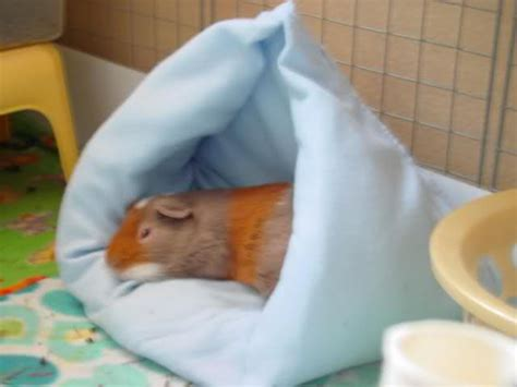how to make a guinea pig bed instructions how to make a hanging bed