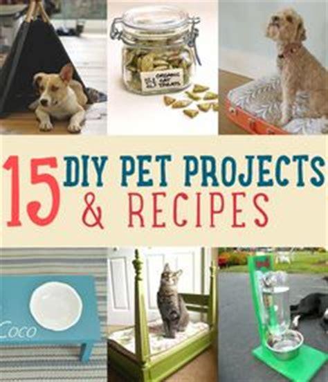 15 diy pet projects recipes treats and