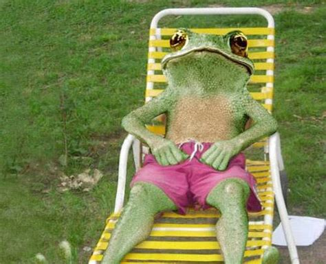 funny animals funny frog photos