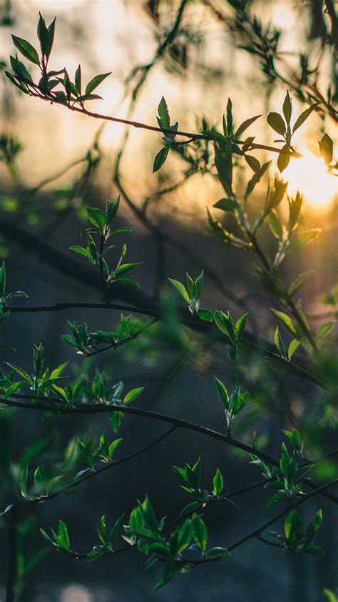 wallpapers by pinterest morning sun download more nature inspired iphone