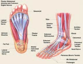 As well left knee ligament diagram on knee diagrams anatomy of a