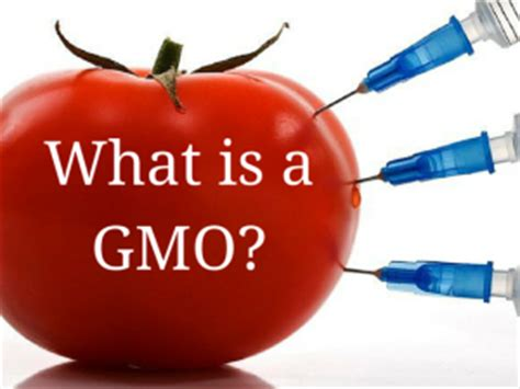 Modified Organism Definition by What Is A Gmo Healthy Hud