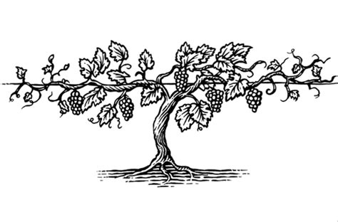 pin drawn vine leaf wreath 14 coloring page vine and