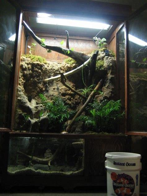 chinese water dragon tank setup chinese water dragon