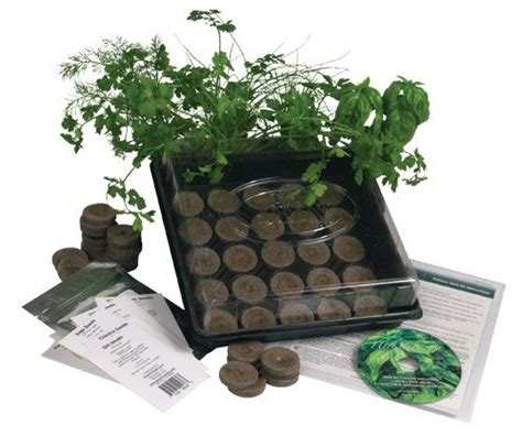indoor herb garden kit living whole foods k5 1 indoor culinary herb garden