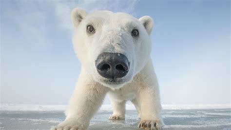 snowbound animals of winter about nature pbs