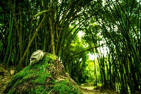 forest green free photo forest green trees bamboo free image on