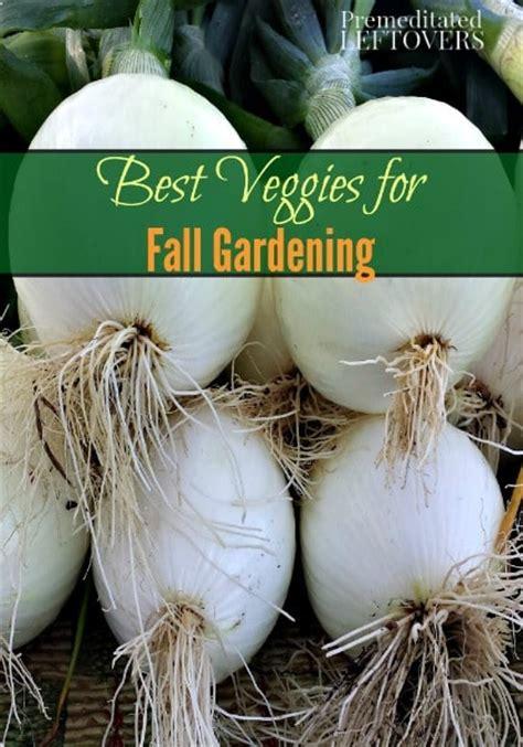 best fall garden vegetables best vegetables for fall gardening