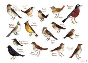 field guide painting thrush wrens etc the