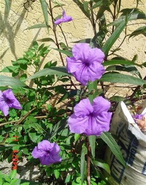 purple flowering shrubs in florida purple flowers for msmarion