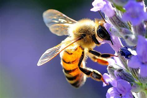 fiori e api 10 piante da coltivare per attirare le api e nutrirle