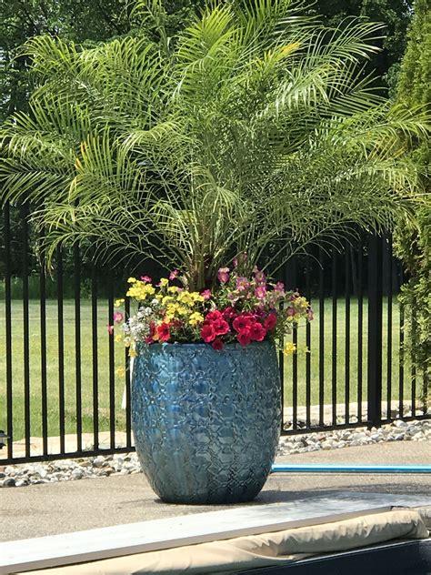 poolside planter backyard plants tropical garden patio