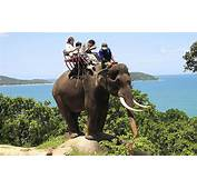 Can Elephant Tourism Be Ethical  Telegraph