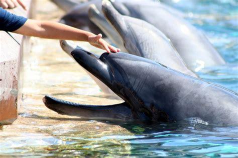 aquatica seaworld florida usa aquatica seaworld florida usa