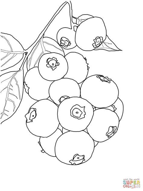 arandanos para sal 8484703665 dibujo de planta de ar 225 ndanos para colorear dibujos para colorear imprimir gratis