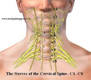 spine c4 c5 diagram cervical fusion mid cervical morphopedics
