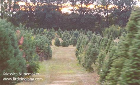 christmas tree farms near indianapolis tree farms indiana photo album best tree decoration ideas