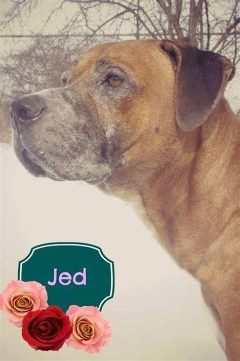mahoning county warden pin by tk greening on doggie