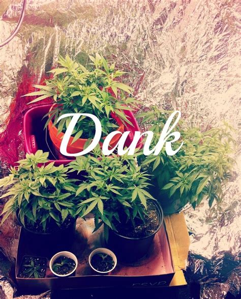 imagenes weed love top 25 ideas about highlife on pinterest cannabis