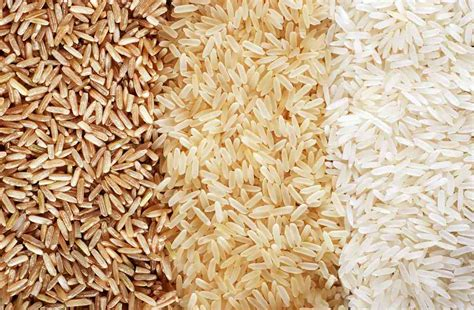 brown rice for dogs can dogs eat white or brown rice and is rice for dogs ultimate home
