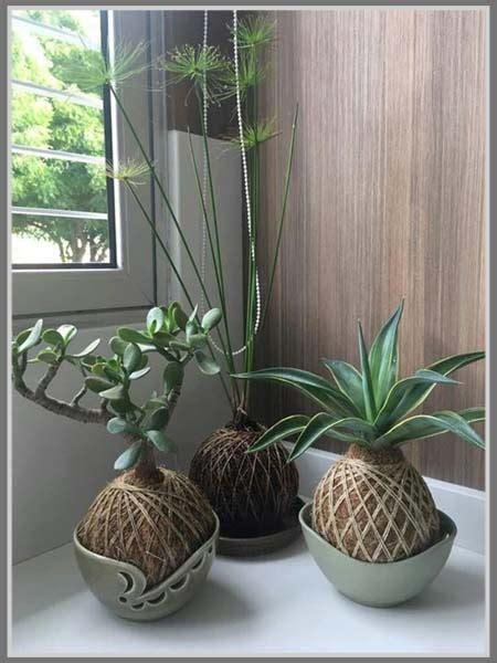 uniknya koleksi tanaman kekinian kokedama