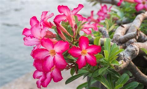 piante da terrazzo pieno sole piante da balcone a pieno sole pollicegreen