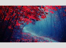 Rote Blätter Wald, Straße, Bäume, Herbst, Nebel, Trail ... Dj Wallpaper 3d