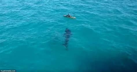 huge shark swims  feet   panama city beach