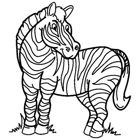 cute zebra coloring page cute pictures of zebras clipart best