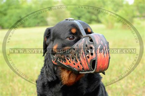 rottweiler muzzle most fashion leather muzzle painted rottweiler breed muzzles