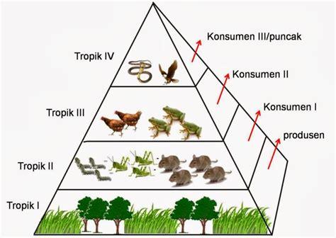 contoh biomassa piramida makanan contoh pengertian penjelasan